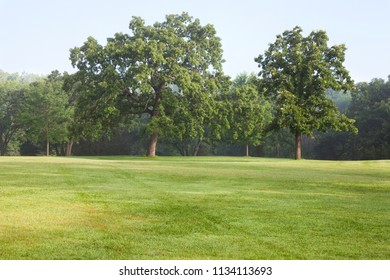 Mature oak trees in a grassy opening in a park on a misty summer morning