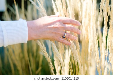 Mature, older female hand with ring brushing through soft straws in field close up.