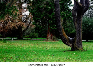 Mature trees in a public park in the UK