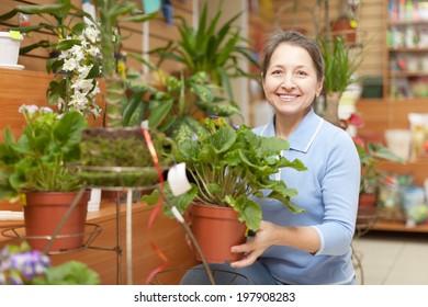 Mature woman chooses primrose  in flower store