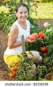 Mature woman harvesting tomatoes in plants