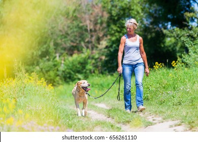 mature woman hiking with a labrador retriever in the summer landscape