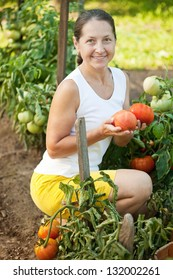 Mature woman picking tomato in plant