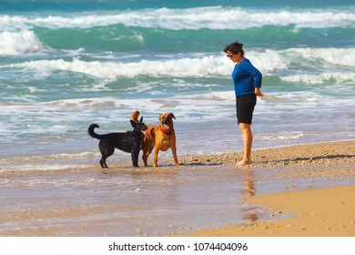 Mature Woman  playing with her dogs on the beach