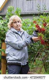 Mature woman with red currant berries on the green bushes against wooden house