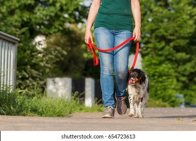 mature woman walking with Brittany dog at the leash on the street