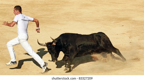 MAUGUIO, FRANCE - AUGUST 19: Competitor Charnelet  runs away from angry bull during traditional bull racing competition in Mauguio, Southern France on August 19, 2011.