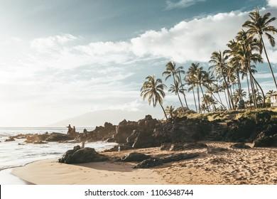 Maui Hawaii palm trees