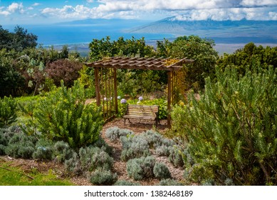 MAUI, HAWAII/U.S.A. - OCTOBER 22, 2018: A view of a garden gazebo with bench near lavender plantings with view of West Maui in the background upcountry at Alii Kula Lavender Farm.