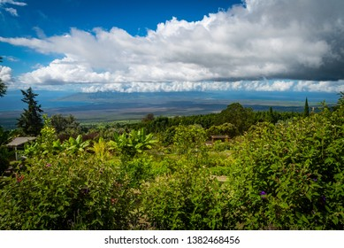 MAUI, HAWAII/U.S.A. - OCTOBER 22, 2018: A view of of West Maui and dramatic clouds overlooking the gardens upcountry at Alii Kula Lavender Farm.
