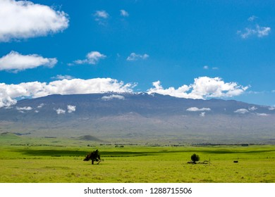 Mauna Kea Mountain seen from Kohala Mountain Road
