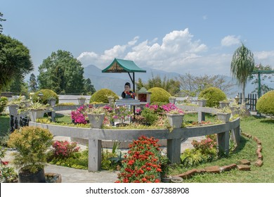 May 02,2017. Pine View Nursery is a versatile full service nursery, garden center and landscape design build firm. Located in Leitchfield, Kalimpong, West Bengal,India.