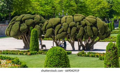 """May 1, 2017, Buen Retiro Park(""""Park of the Pleasant Retreat"""")  Madrid, Spain.  People like to hang around these sculptured cypress trees in the botanical garden."""