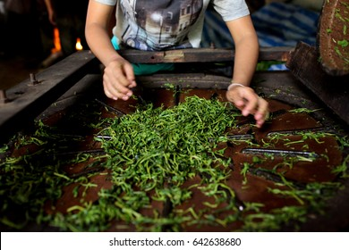 May 14  2017:  young Karen women roll tea leaves using old machine in Huay Hin Lad Nai village in Chiangmai.