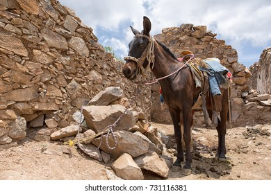 May 22, 2014 Real de Catorce, Mexico: horse back tours around the abandoned silver mining town are popular with the tourists