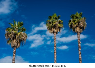 MAY 25, 2018 OAK VIEW, CALIFORNIA, USA - Three Palm Trees in Oak View California with blue sky and golden light