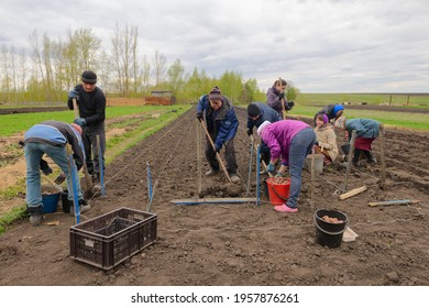 May 6, 2017: Planting potatoes in a plowed field by hand. Chuvashia. Russia.