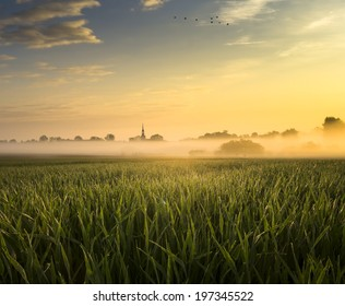 The May field in the sun and the fog
