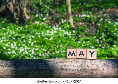 May spring sign in a green garden in a tree
