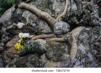 May2017, Bangkok, Thailand, roots of a Banyan tree weave through stones and clay shards and are decorated with white and yellow flowers on the monastery ground