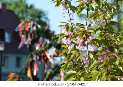 Maypole installation in Lenzing (Vöcklabruck district, Upper Austria, Austria) - A maypole is a decorated tree or trunk that will be placed in Austria on May 1 (usually April 30) in the village or tow