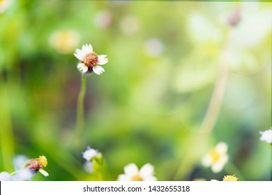 Mayweed flowers with bokeh background