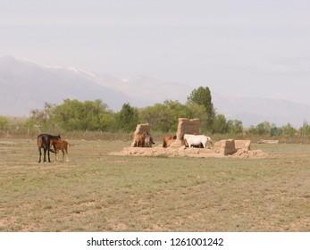 Mazars in the ancient Muslim cemetery