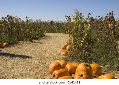 Maze entrance with pumpkins