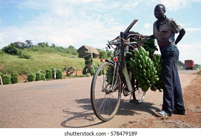 MBARARA, WESTERN REGION/UGANDA - JANUARY 29TH 2011 - A man carries a load of plantain on his bicycle near the town of Mbarara in Western Uganda.