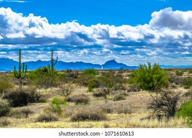 McDowell Wilderness in Arizona Desert