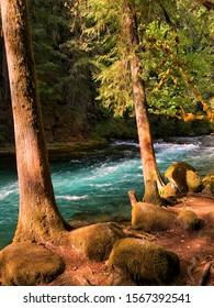 The McKenzie river near McKenzie Bridge, Oregon - USA