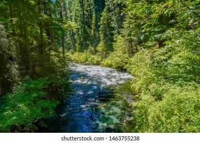 The McKenzie river in a pine tree forest near McKenzie River, Oregon