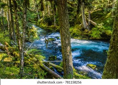 McKenzie River Trail in Beautiful Oregon State
