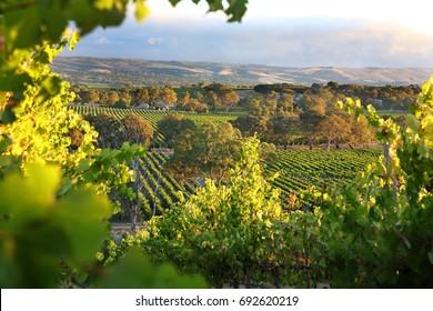 McLaren Vale, South Australia Wine region
