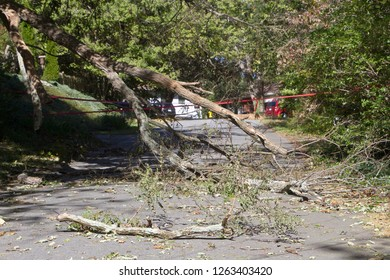 A mdead tree falls, shattering onto a narrow road completely blocking it with broken branches and scattered debris