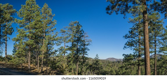 Meadow among the trees in the tall mountains of southern California.
