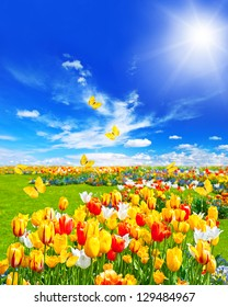 meadow with assorted tulip flowers in green grass. spring landscape with butterflies and sunny blue sky