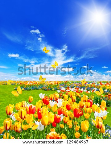 green grass blue sky flowers cloudy meadow with assorted tulip flowers in green grass spring landscape butterflies and sunny blue meadow assorted tulip flowers green grass stock photo edit now