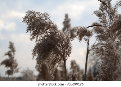 A meadow in autumn, brown dry grass with seeds, sky in the background.