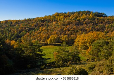 Meadow and autumn forest with oaks  between Osona an llucanes.