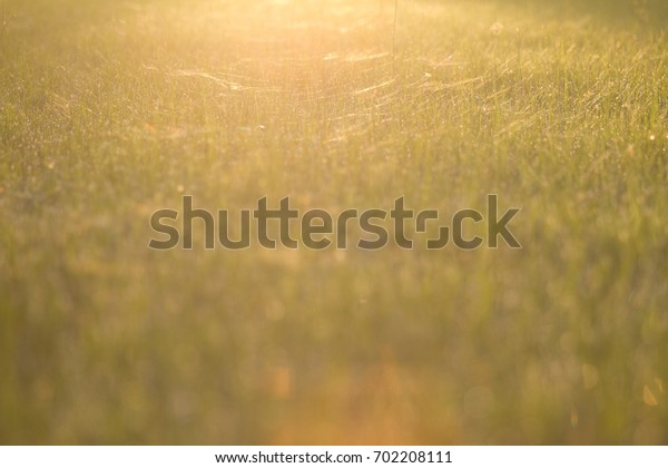 Meadow background Sunrise time