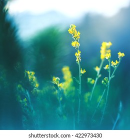meadow beautiful yellow flowers on natural mystery dark green background in forest. Morning fresh outdoor summer photo