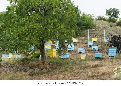 Meadow with bee hives and tree. Small bee farm