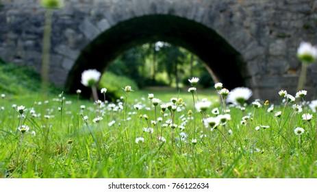 meadow beneath the stone bridge