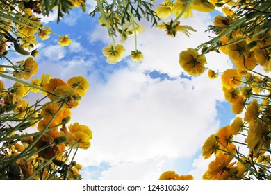 """Meadow of the blossoming yellow and orange buttercups, photographed by an objective """"Fish eye"""""""