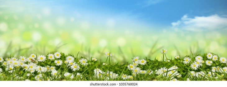 meadow with blue sky background