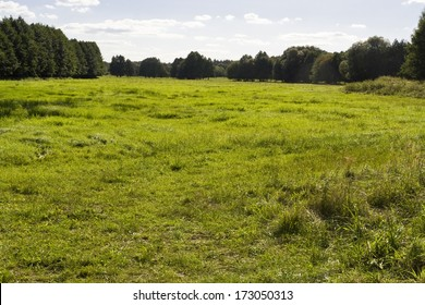 Meadow in Brandenburg, Germany