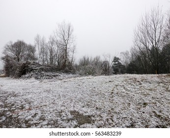 A meadow and bushes covered in snow during winter