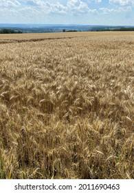 Champ de prairie et de maïs par heilbronn dans le sud de l'Allemagne