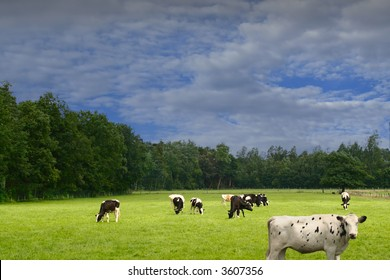 Meadow with cow and cloudy sky